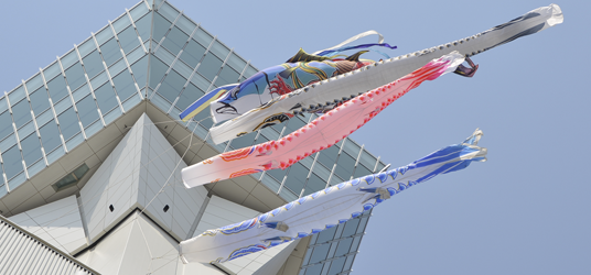 在五稜郭塔的塔台上設置「大型鯉魚旗」