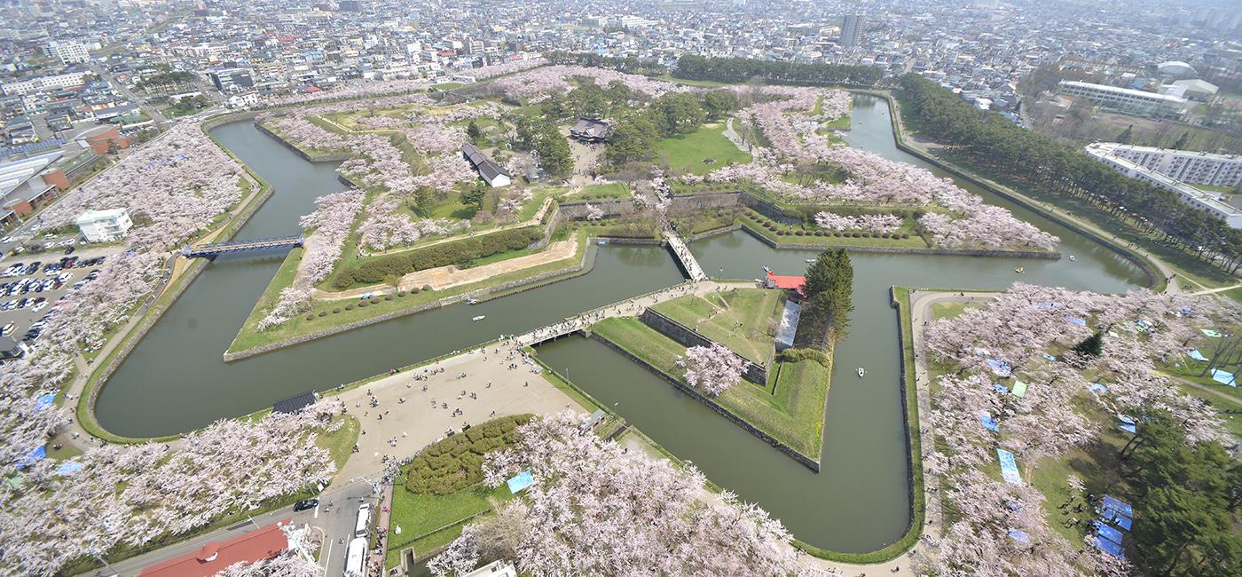 五稜郭の桜(4月下旬〜5月上旬)